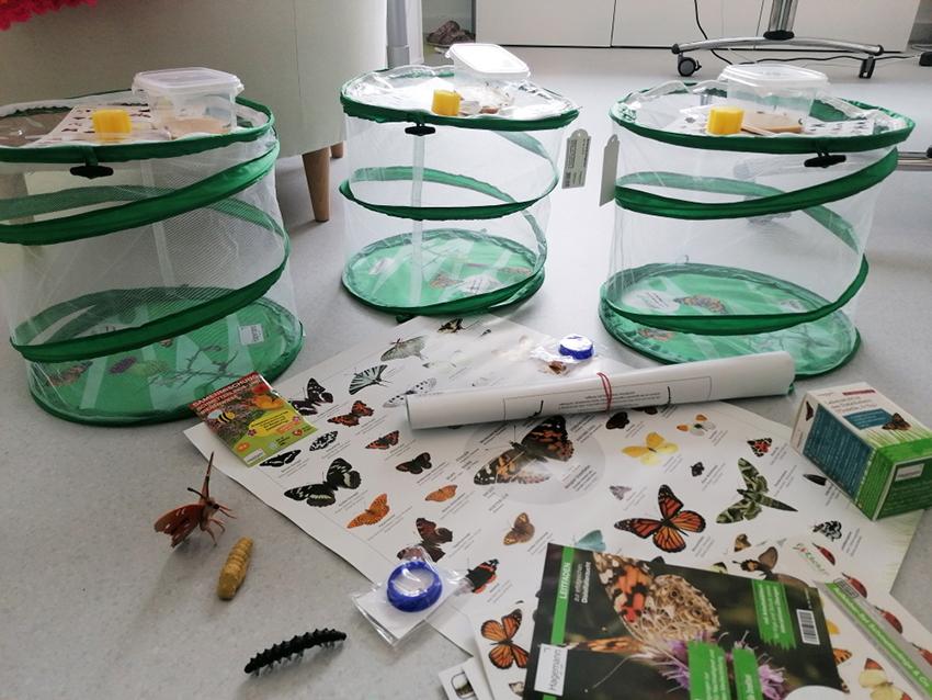 Forscher-Material für die Schmetterlingszucht
