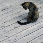 Das Bild zeigt eine getigerte Katze allein auf einem Holzsteg.