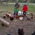 Das Bild zeigt zwei Bewohner beim Füttern der Hühner.