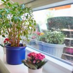 Das Bild zeigt eine lange Fensterbank mit Blumen und Pflanzen.