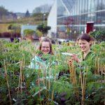 Das Bild zeigt Mitarbeiterinnen bei der Pflanzenpflege.