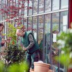Das Bild zeigt zwei Mitarbeiter beim Transport von Pflanzen.