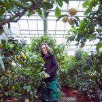 Das Bild zeigt eine Mitarbeiterin bei der Pflege der Überwinterungspflanzen.
