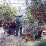 Das Bild zeigt zwei Personen bei der Pflege der Überwinterungspflanzen.